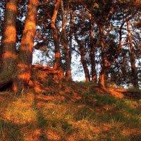 Закатной догорая тишиной... :: Лесо-Вед (Баранов)