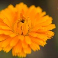 цветы :: Juli Chaynikova