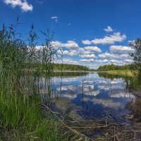 Летний день на озере. :: Эдуард Пиолий