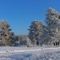 Околдован лес стоит... :: Светлана Медведева