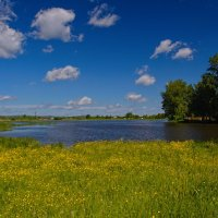 Цветочная поляна :: vladimir