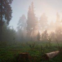 Туман мохнатый зыбит мглу... :: Владимир Комышев