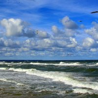 Чайки над морем :: Сергей Карачин