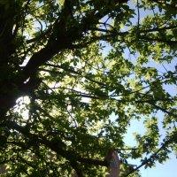 Солнечное настроение :: Иришка Бекетова
