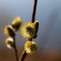 Цветы нашего мира. :: Nata Potapova