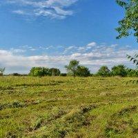 Травы, травы... :: Serz Stepanov