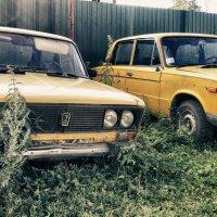 Две подружки - две старушки..)) :: Светлана Игнатьева
