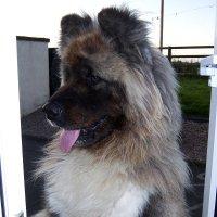 Здрасте вам через окно! :: juriy luskin