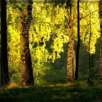Вечерний свет :: Olenka