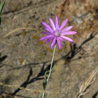 Каменный цветок :: Marina Timoveewa