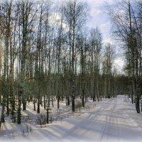 зимняя свежесть :: Олег Петрушов