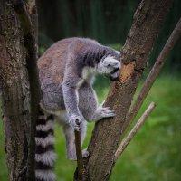 В зоопарке :: Андрей Пашков