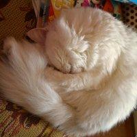 прост так спать наверно удобней... :: Вик ✿