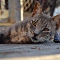усталый кот :: Евгений Фролов