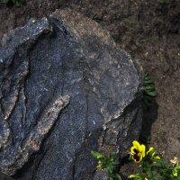 Цветок и камень :: juriy luskin