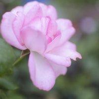 Цветочек :: Кристина Бессонова