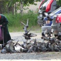 Летите голуби... :: Галина Полина