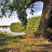 Тополь у реки :: Любовь Потеряхина