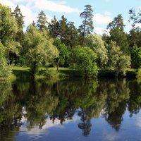 Лесной пруд :: Карпухин Сергей