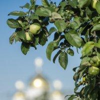 молодинские яблочки :: Василий Либко