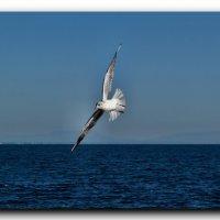 Полет над морем :: Ольга Голубева