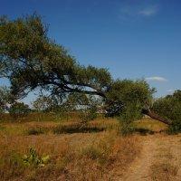 Дикие прерии в Тульской области :: Александра Юхник