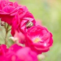 Майский жук :: Кристина Бессонова