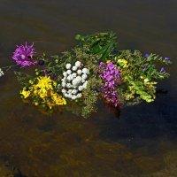 Цветы на воде. :: Любовь Чунарёва