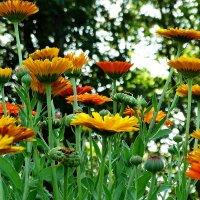 Лес цветов или цветочный лес. :: Владимир Гилясев