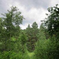 В густом лесу. :: Мила Бовкун