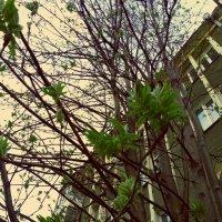 Весна в Новосибирске :: Lady Etoile