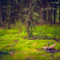 Утром в лесу :: Valeriy Shyshkin