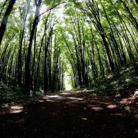 Дорога в лесу :: Арина Сивцева
