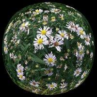 Моя Вселенная - Планета Цветы :: muh5257