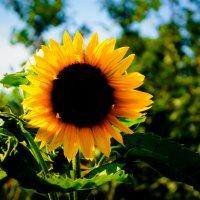Солнечная радость :: Полина Макарова