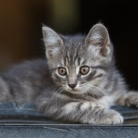 Котёнок :: Igor Yakovlev