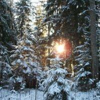 Для тех, кто скучает по зиме! :: Виктор Елисеев