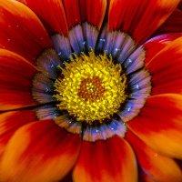 Цветок. :: juriy luskin