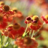 цветочки :: igor volgin