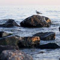 Море :: Виталий Ацабрик