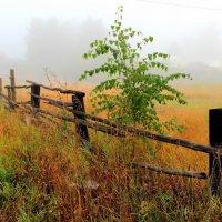 Июльским августом туманы... :: Лесо-Вед (Баранов)