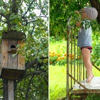Что там на дереве такое? :: Вероника Любимова