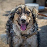 ещё один пёс :: Елена Борисенко
