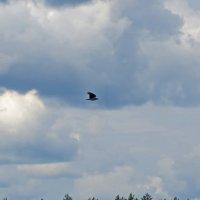 Птичий мир :: alemigun