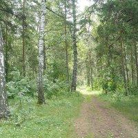 Шершневский лес :: натальябонд бондаренко