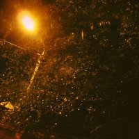 мокрая  листва :: Дмитрий Потапов