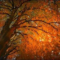 Осень, дерево, фонарь. :: Ю Д