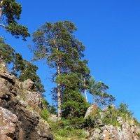 И на камнях растут деревья... :: Ольга Иргит