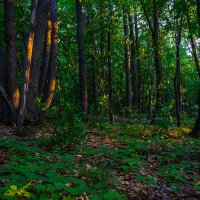 Утро в лесу :: Sergey Kuznetsov