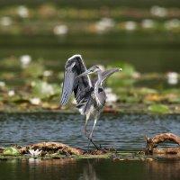 Танцы на воде :: Роман Ватрасевич